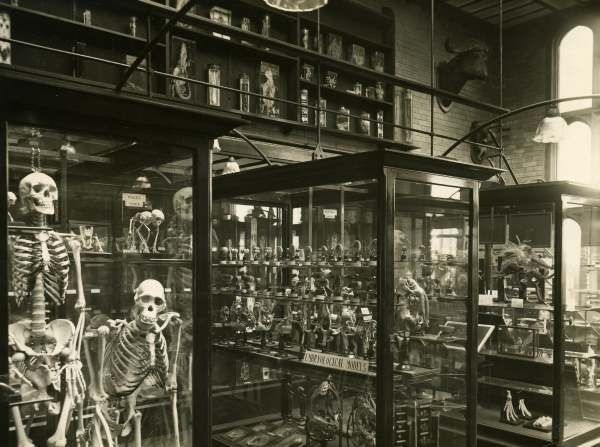 ALFRED DENNY MUSEUM, University of Sheffield, Sheffield, United Kingdom