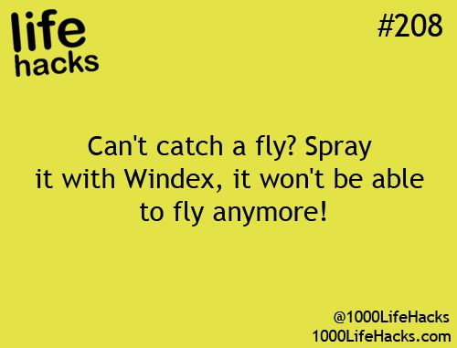 "Pest Control Tip: ""Can't catch a fly? Spray it with Windex, it won't be able to fly anymore!"" – life hacks #208 via 1000 Life Hacks"