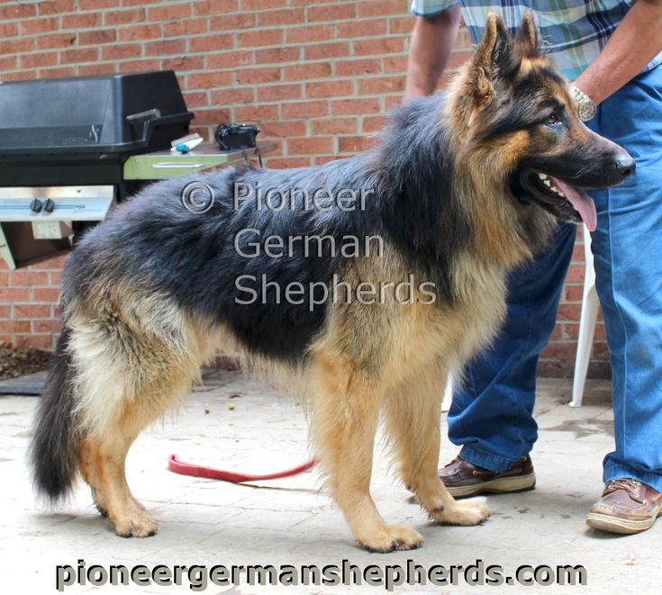 Zeus at 3 years of age