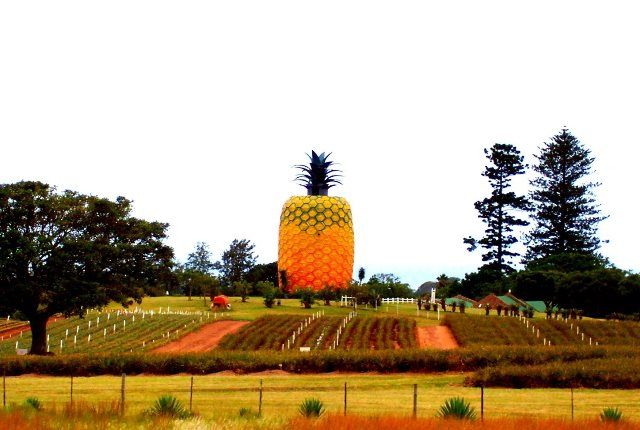 Big Pineapple #Bathurst #SunshineCoast the 6th Wonder of our World. The Big Pineapple stands at 16.7m tall and celebrates one of the area's biggest natural exports.