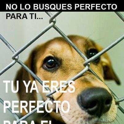 Tú eres perfecto