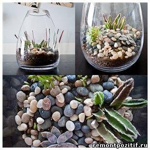 Флорариум своими руками. Как сделать мини сад в стекле, растения для флорариума