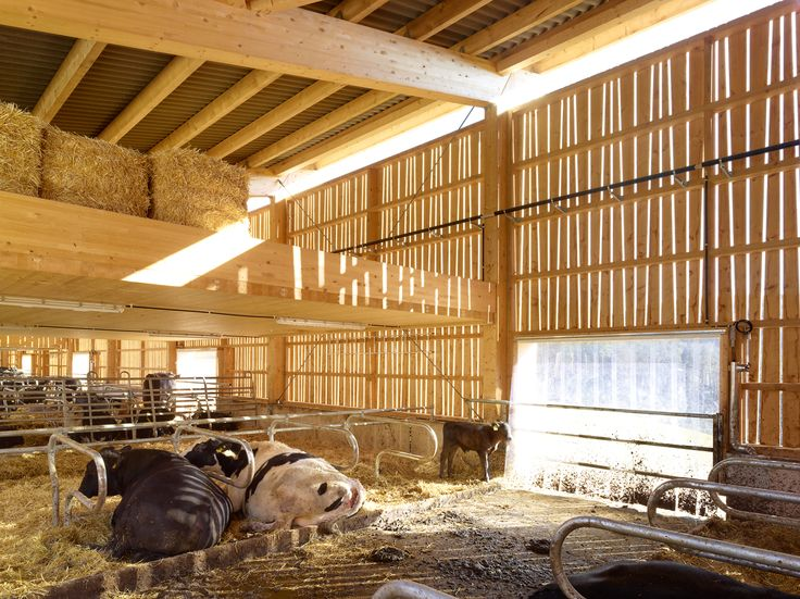 Cowshed Wildenstein - screen light The building develops as a set of structural wooden frames that create rhythms and space hierarchies. The floor plan is ruled with a strategic metric to define all interior spaceThe long facades are designed as an open wooden frame that incorporates references to traditional and rural wood ornament. They are the mediators of the repetitive, internal structure and the surrounding cultural landscape.