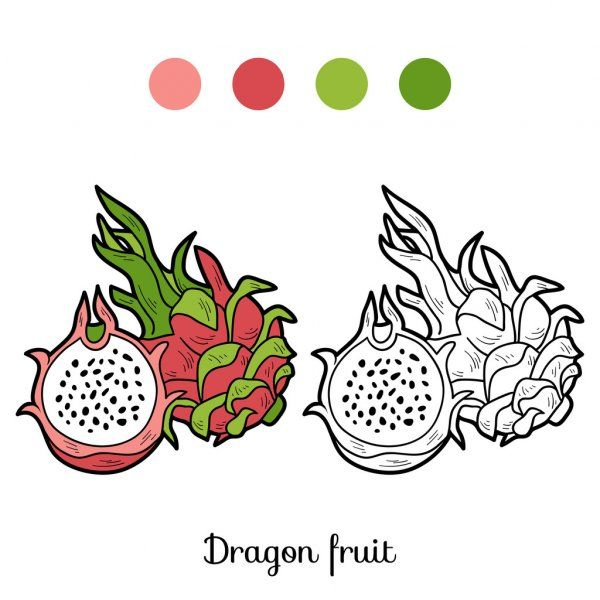 Coloring Book Game Fruits And Vegetables Dragon Fruit Stock Vector Aff Game Fruits Colo In 2020 Coloring Books Kids Coloring Books Coloring Book Download
