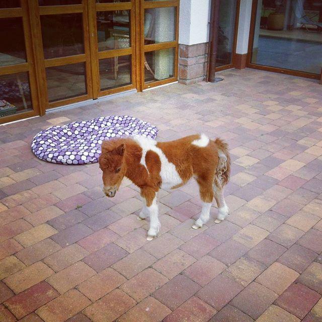 #pony #stuffedanimal #baby
