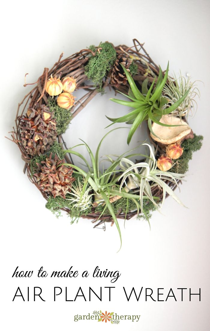 For a more lively wreath, try an air plant wreath with this tutorial courtesy of Garden Therapy. Since air plants do not need soil, they are perfect for a wreath you can hang up and care for throughout the year. Click in for the complete tutorial.