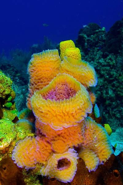 vase sponge - Google Search