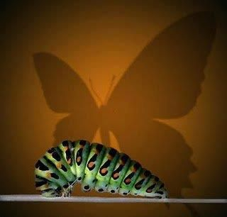 """""""We are living in a world that is in the late stage of a Caterpillar. It is very important to let go of the old and start to gravitate to the new because we are leaving behind a world that is no longer sustainable and moving into a world in which we can thrive """"   ~~ Bruce Lipton."""