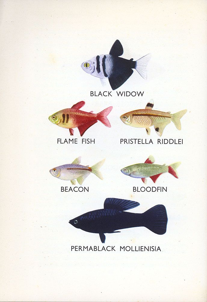 48 best plant drawing images on pinterest botanical for Types of small fish