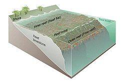 Koralliriutta – Wikipedia