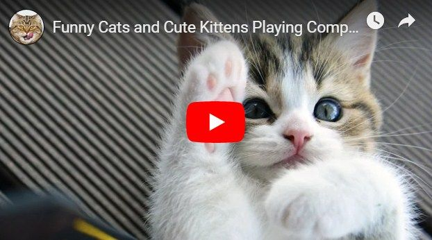 Funny Cats And Cute Kittens Playing Compilation For Laugh