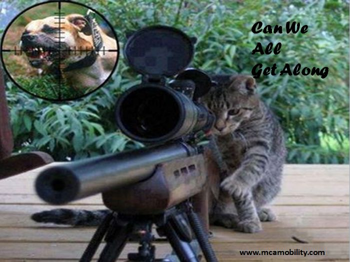 17 Best images about Cats on Pinterest | No worries, You ...