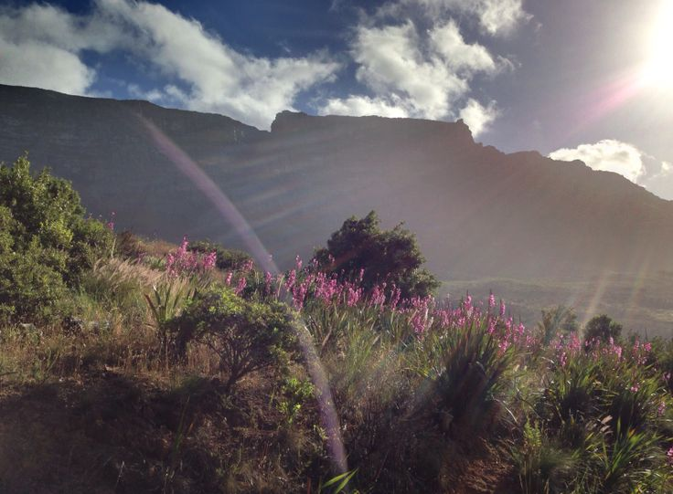 Table Mountain pretty in pink! Cape Town, South Africa. (Photo: A Jacobsen)
