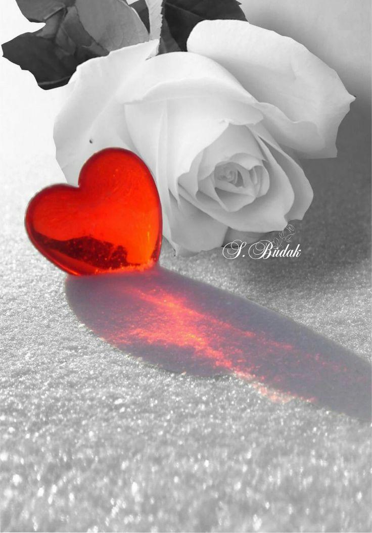 даже картинки розы я люблю тебя так сильно кафеля невозможна