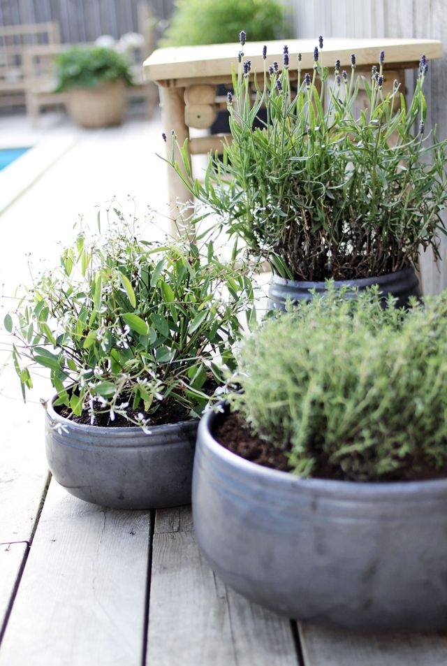 Grey pots with herbs