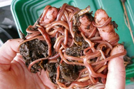 RHS website about vermicomposting