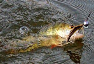 Рыбалка видео: Ловля окуня весной