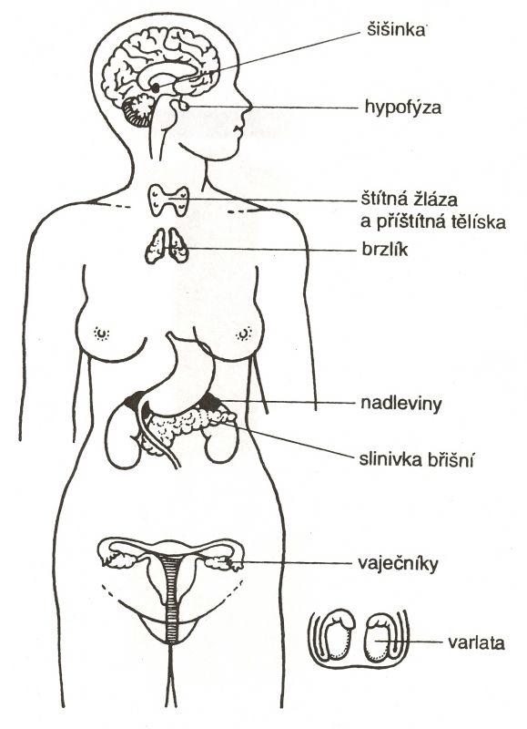 jak-odvapnit-vasi-sisinku-mozkovou-dovednost-