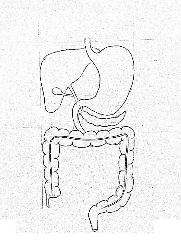 Gi Tract Diagram