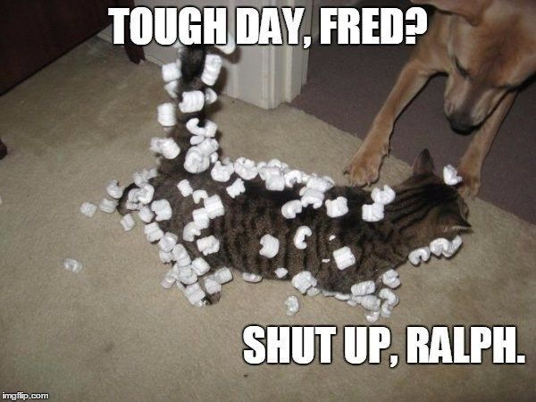 You Have Decided Here Are The Best Cat Memes Of The Decade 100 51 Best Cat Memes Cool Cats Cat Memes