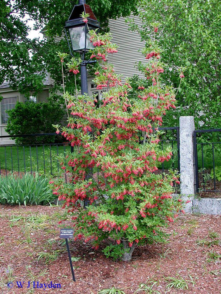 Plants For Garden on Mountain Patio Ideas