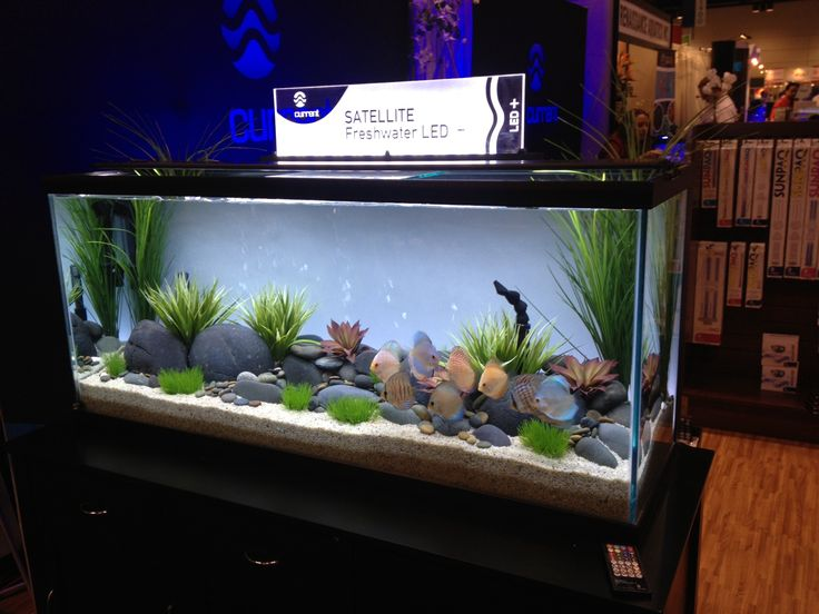 A discus aquarium lit with the Satellite LED freshwater aquarium light with built-in wireless control of color spectrum, cloud cover and storm effects.