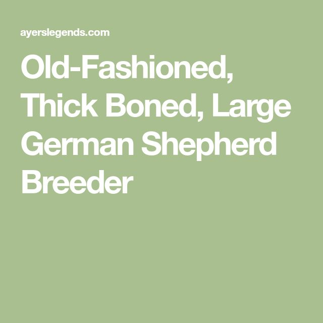 Old-Fashioned, Thick Boned, Large German Shepherd Breeder