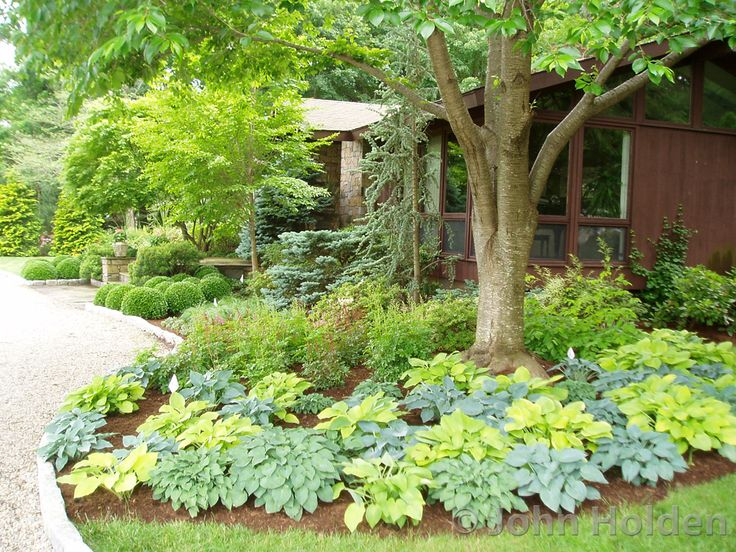 Foundation plantings for front of house foundation for Plants for front of house ideas