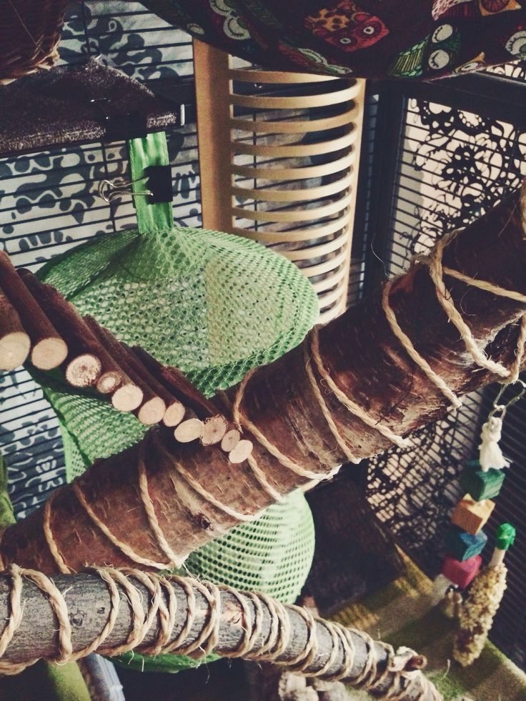 DIY rat cage accessories, natural wood