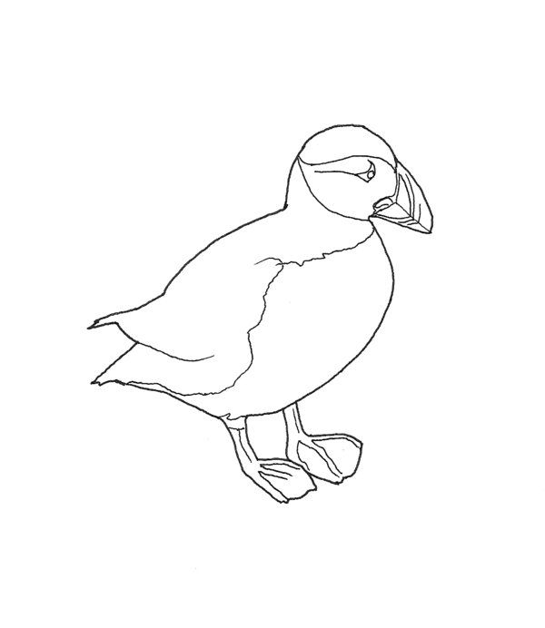 anlatic puffen colering pages puffin colouring pages page 2
