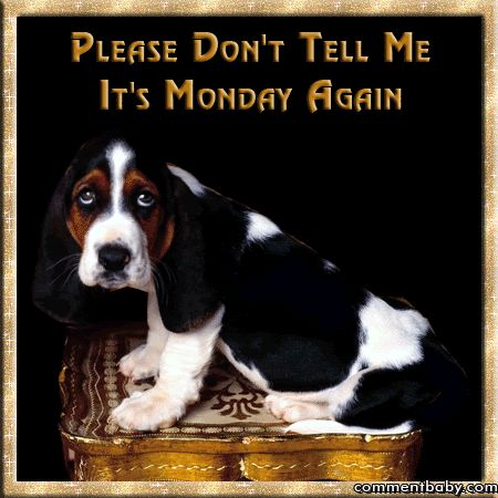 Please don't tell me it's Monday again... animated dog gif monday happy monday monday greeting monday quote
