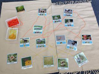 DIY Educational Materials: Food Web Material