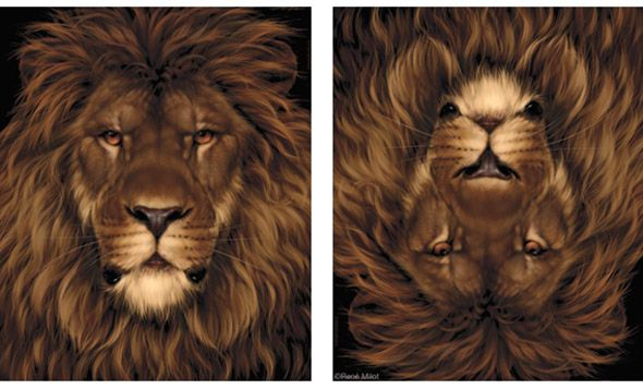 Lionmouse Optical Illusion | Mighty Optical Illusions