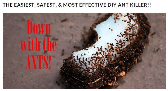 Something to try if I have ant issues.... http://www.agoodtired.com/the-easiest-safest-most-effective-diy-ant-killer/