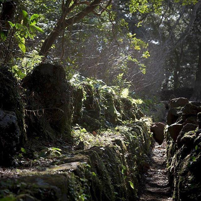 【lyrocky】さんのInstagramの写真をピンしています。《이끼, 돌, 햇살, 비자림, 제주도 #제주도 #여행 #비자림 #숲 #산림욕 #이끼 #돌 #햇살 #피톤치드 #자연 #사진 #jeju #trip #travel #woods #nature #green #sunshine #stones #林 #旅行 #自然 #フォト #山 #韓国 #緑》