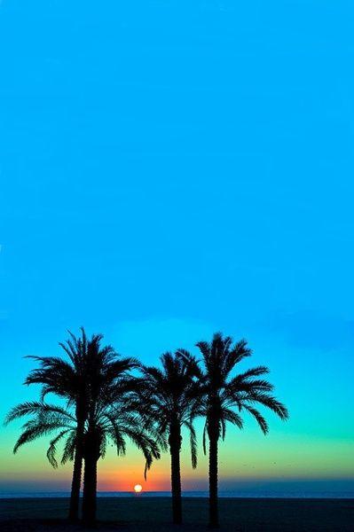 Hawaiian Sunset. #silhouette #PalmTrees #beach