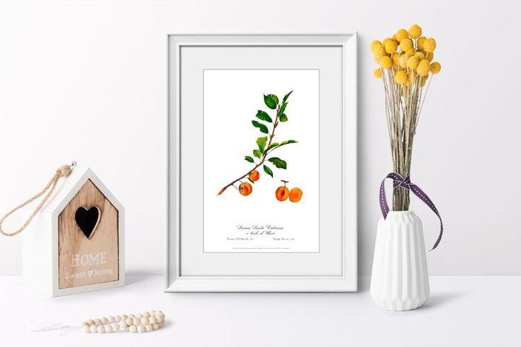 Art print Apricot poster Botanical watercolour vintage picture antique art decor #Vintage