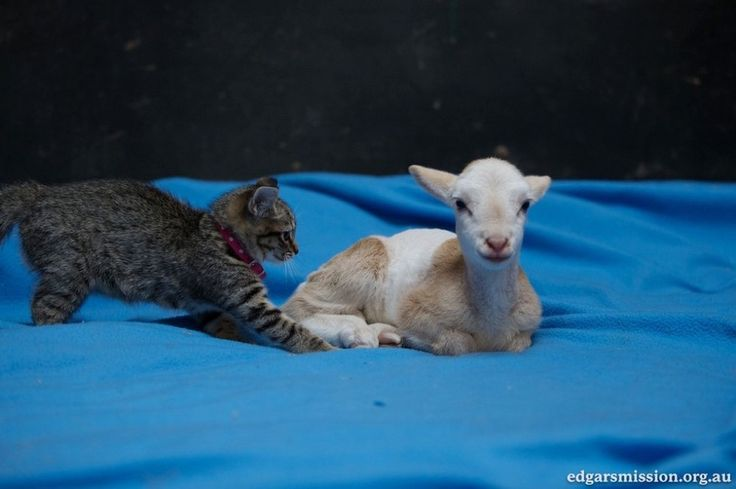 Two Rescue Kittens Find Love and Comfort in an Unlikely Friend