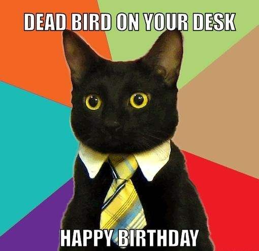 Dead Bird For You - Funny Happy Birthday Meme                                                                                                                                                      More