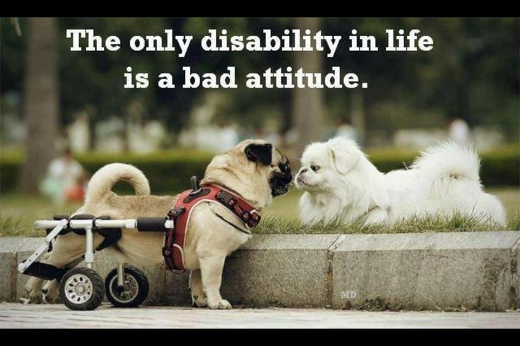 Thought for the Day Quotes | Thought for the day : Attitude | Daily Inspirations for Healthy Living