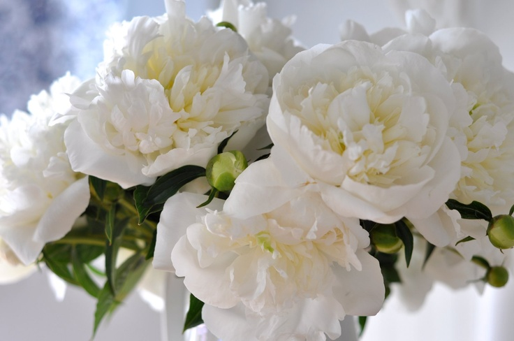 white peonies - love these :)
