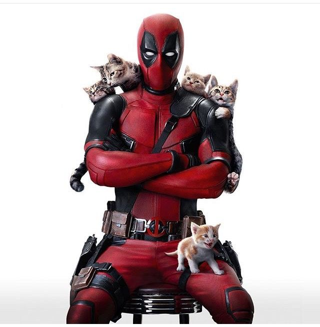 Kitties. This is by far my favourite picture of Deadpool EVER