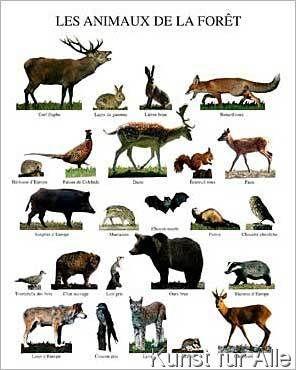Atelier Nouvelles Images - Les animaux de la forêt