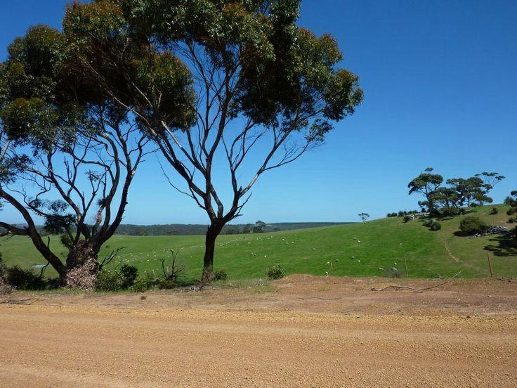 Roadside, Kangaroo Island South Australia. Photo Tania Cavaiuolo