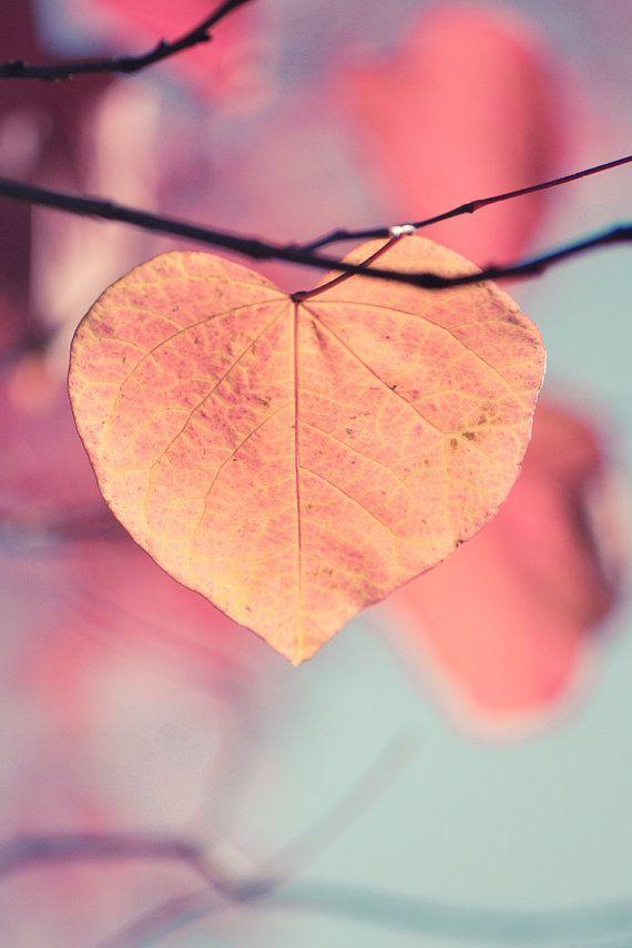Autumn Photograph, Heart Shaped Leaf, Orange, Gold Leaves on Tree in Fall, Home Decor #CroscillSocial