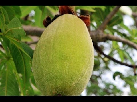 For more information click here: http://naturesbestcrop.com/baobab-fruit-2/