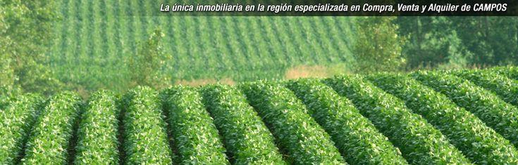 LA HERRADURA Inmobiliaria Rural Compra - Venta de campos en Argentina - SA PEREYRA 60 Has. Excelente campo ganadero. Instalaciones. EN VENTA