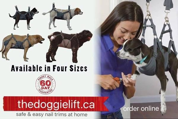 The Doggie Lift Complete Package 1 Most Popular Dog Sling Dog