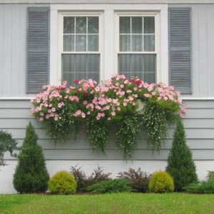 Bay Window Garden Ideas find this pin and more on window gardens Under Our Bedroom Window Or The Bathroom Glass Blocks Window Boxes Articles Dress