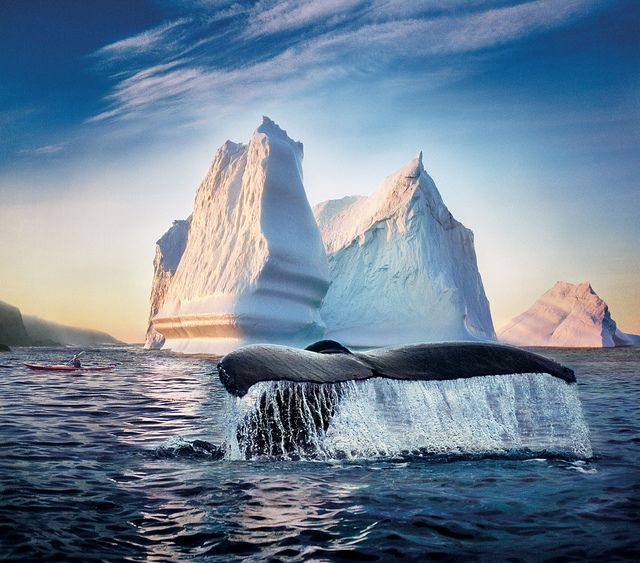 Whale and Iceberg, what a sight to see!! Newfoundland and Labrador